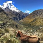 Snow Capped mountain: Peru Treks