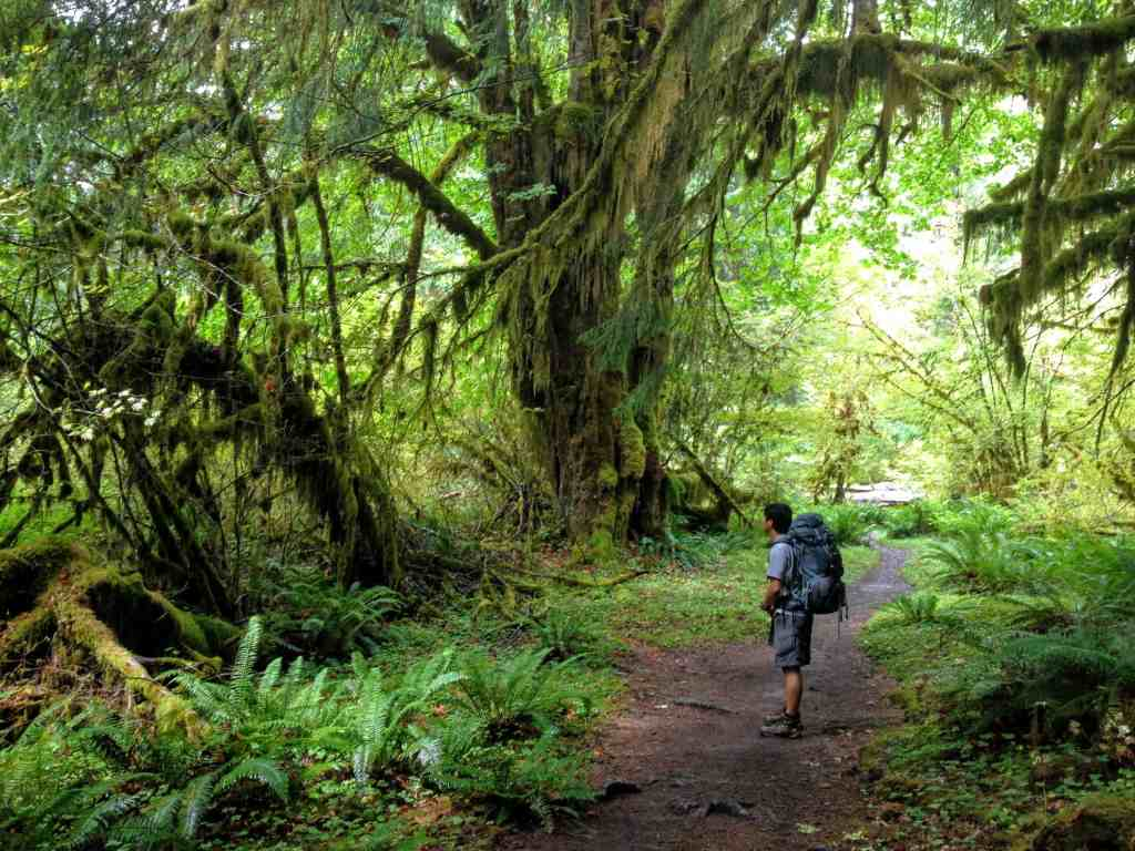 Trin standing in the Hoe Rain-forest of Washington State USA