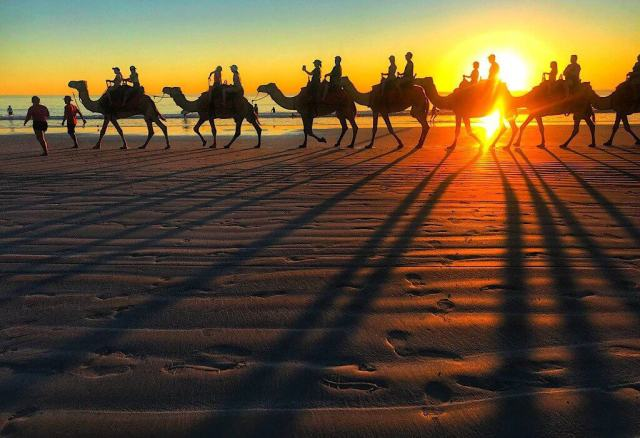 Camels on Cable Beach in Broome