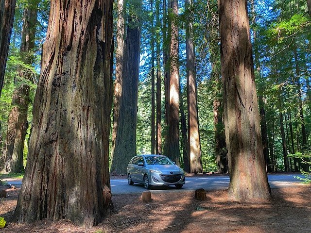 Our Mazda 5 parked by the redwoods in Avenue of the gods