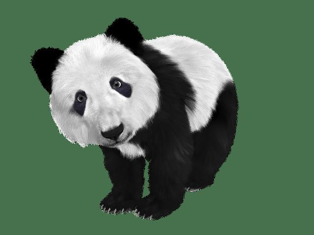 熊猫VPN
