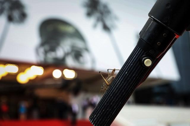 Special guest Festival de Cannes Festival de Cannes 4chion Lifestyle Red Carpet a