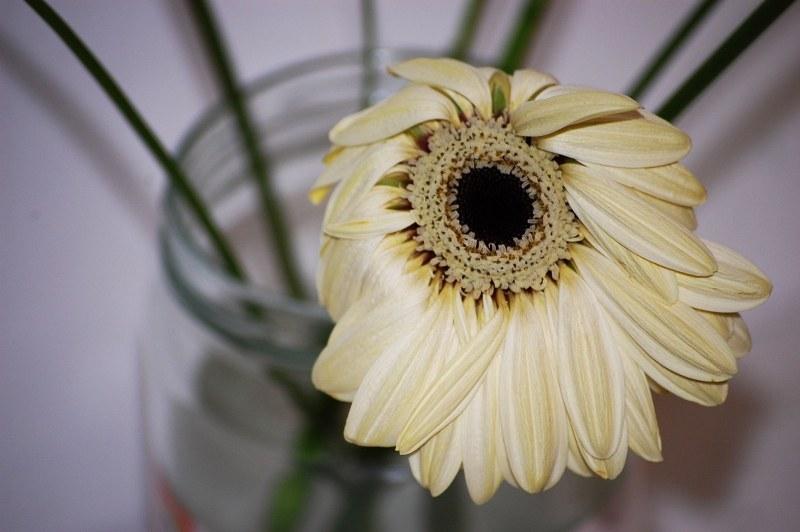 Image result for wilted flower