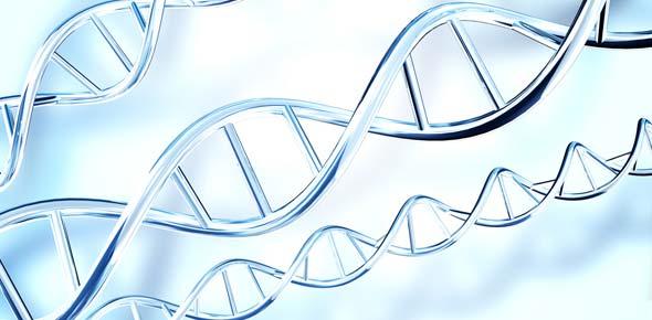 Κυτταρική διαίρεση - Μίτωση