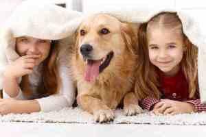 مخاطر تربية الحيوانات في المنزل