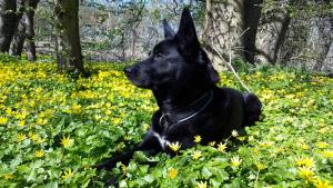 positive and force-free dog training