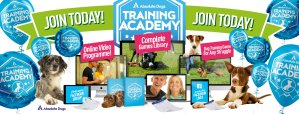 training academy by absolutedogs