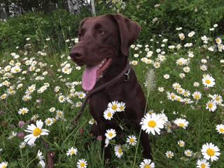 gabby dog parkour