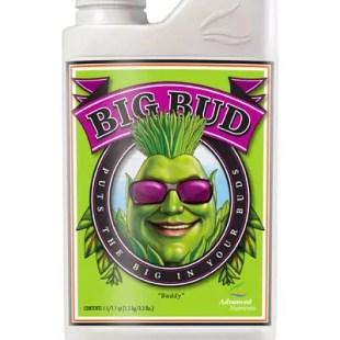 Advanced Big Bud