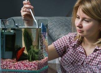 Anleitung für die Reinigung von Aquarien