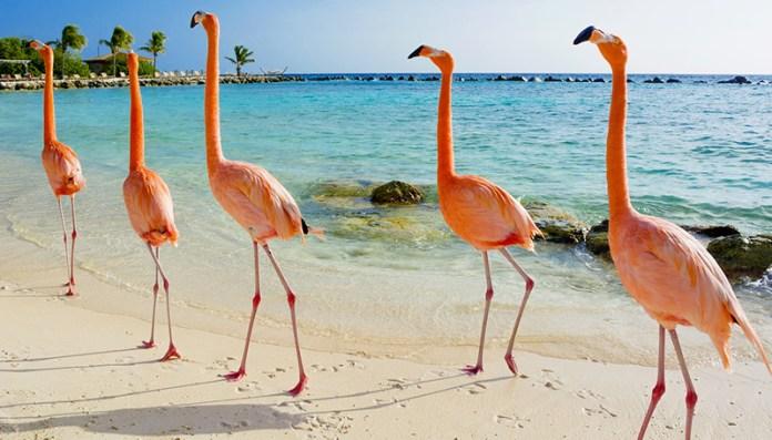 Flamingos in ihrem Lebensraum