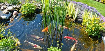 Sauerstoffversorgung im Gartenteich