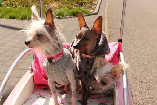 Drei Hunde im Hundetrolley
