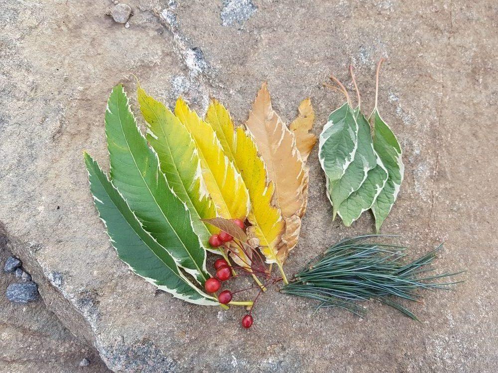 Växtrea och vad hände med löftet?