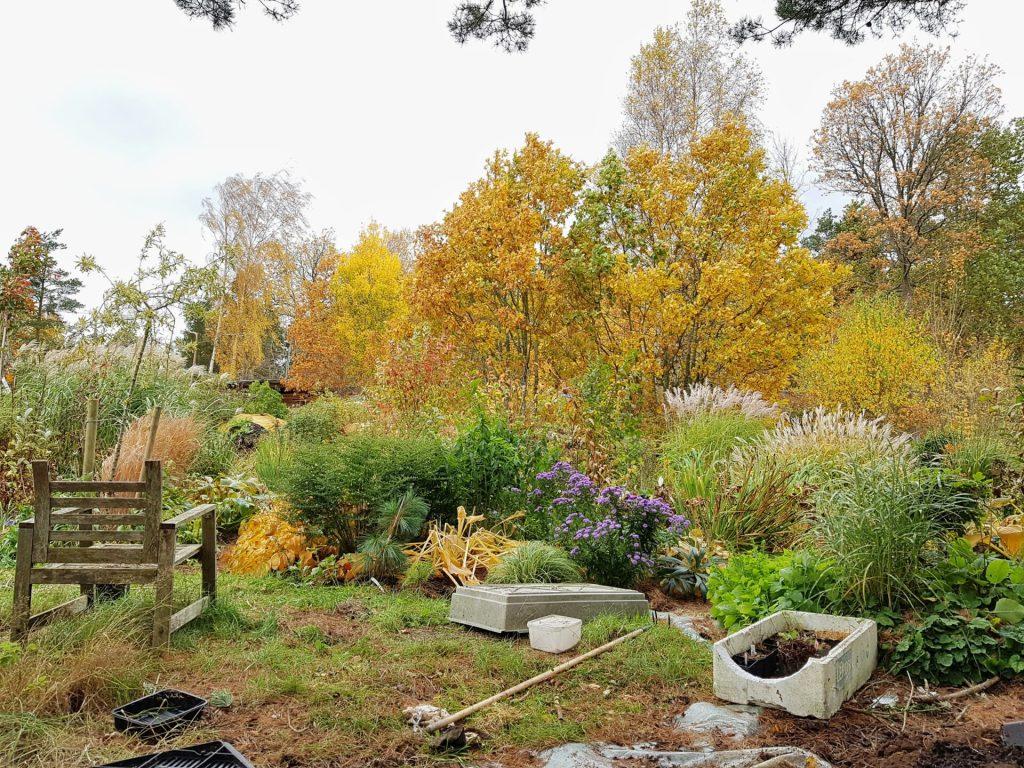 Trädgården just nu - höstfärger