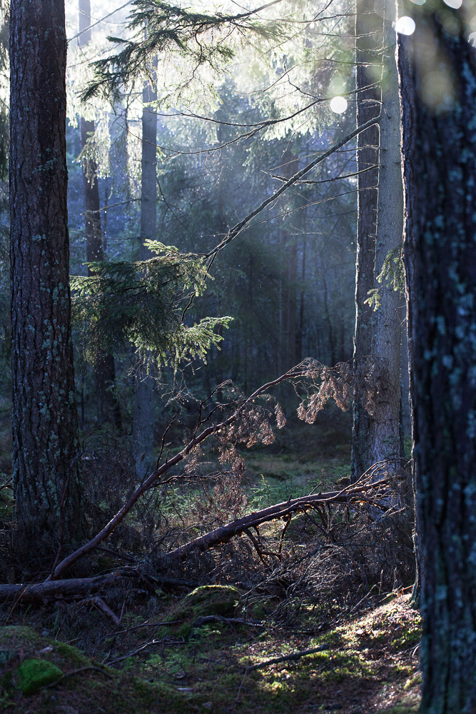 Färdsleskogen