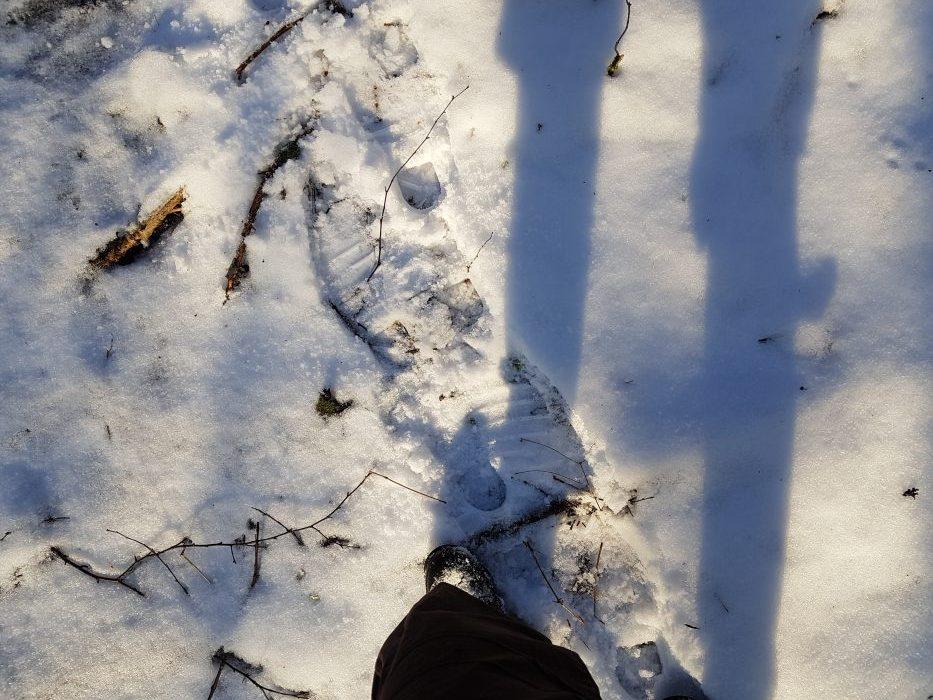 Snö och solsken i lunden