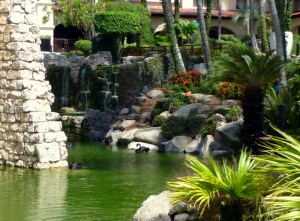 Black Swans @ The Hyatt Regency Aruba