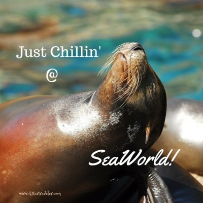 Just Chillin' @ SeaWorld