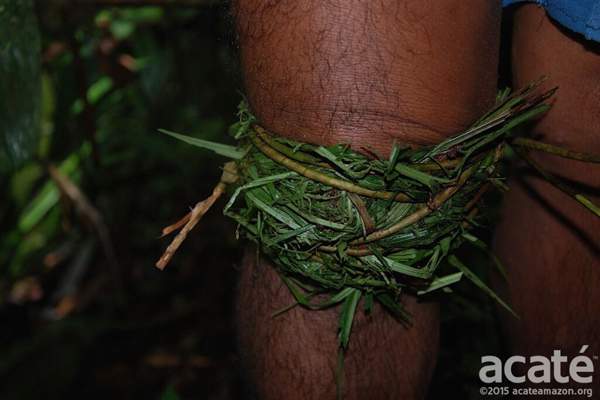 Applied traditional medicine of the Matsés. Photo courtesy of Acaté.