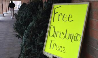 *FREE* Live Christmas Tree at Kroger