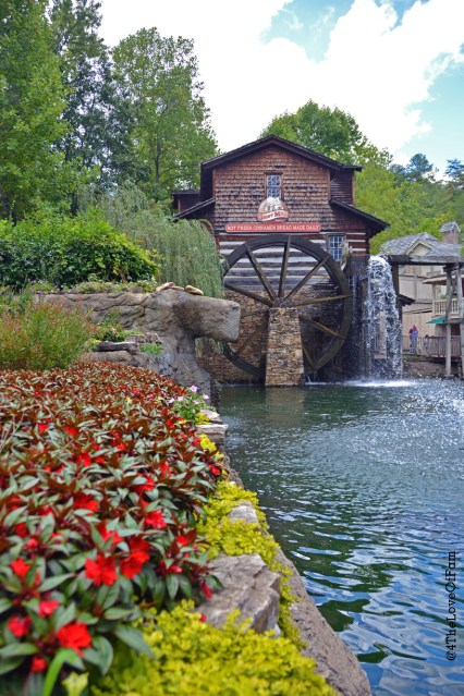 Experience The Educational Side Of Dollywood!
