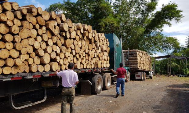 No toda la madera sale de los bosques