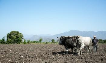 Plan de producción agrícola desconectado de la realidad