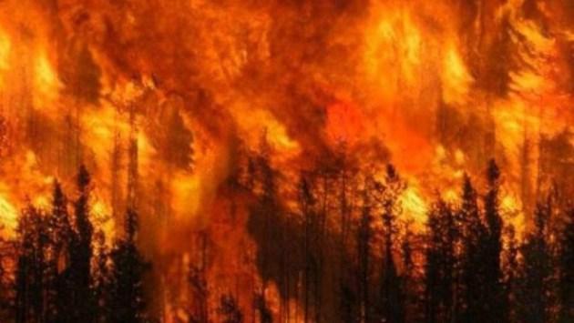 Lo que sucede en California, luego de años de supresión de los incendios forestales, es intimidante,  devastador (Foto: La República).