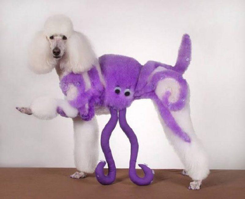 6-perro