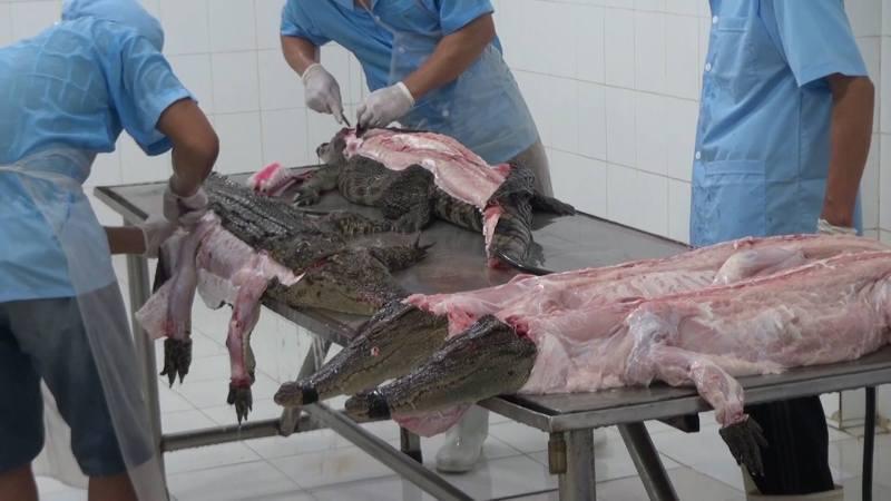 cocodrilos-desollados-peta
