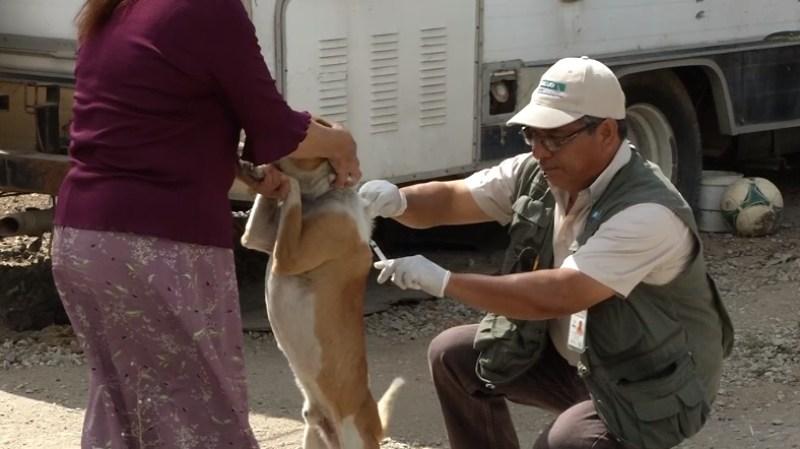 perro-vacuna-garrapata-ricketsia