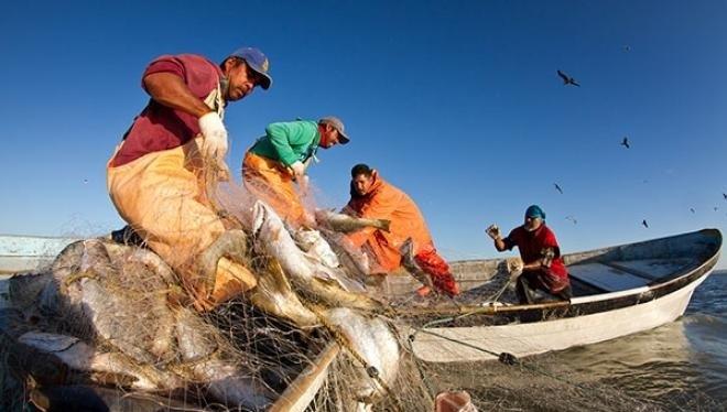 Urge reformar la Ley de Pesca y Acuacultura para que los municipios impulsen esta actividad: Dip. Claudia Agatón