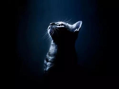 O gato era considerado um animal mágico no antigo Egito