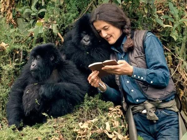 Dian Fossey, zoolóloga, foi assassinada por caçadores de gorilas aos 53 anos de idade