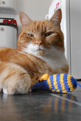 knitting for cats protection charity