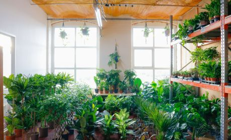 Boost Your Health and Well-being With Indoor Plants