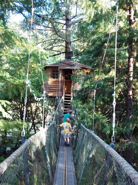 Plan ahead family adventure: Out n About Treesort