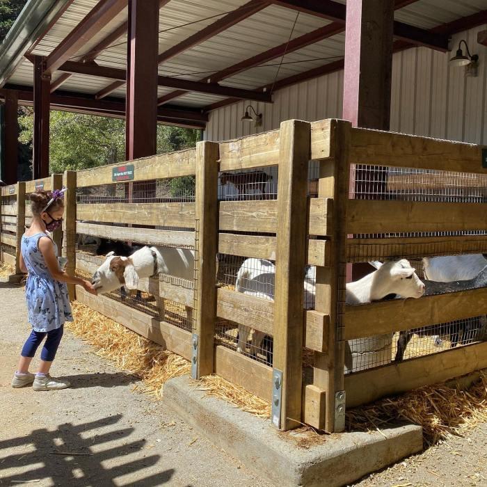 Lemos Farm goats