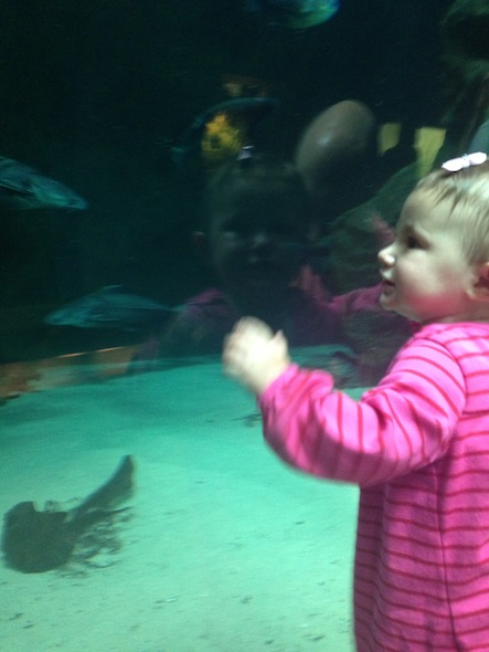 Cal Academy for toddlers