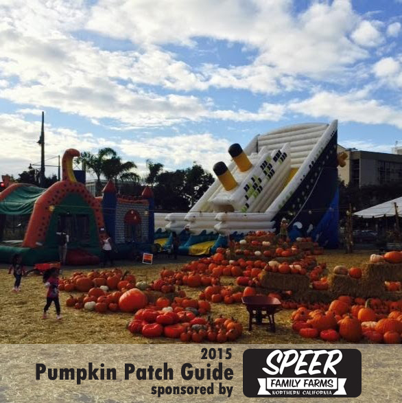 East Bay pumpkin patch guide