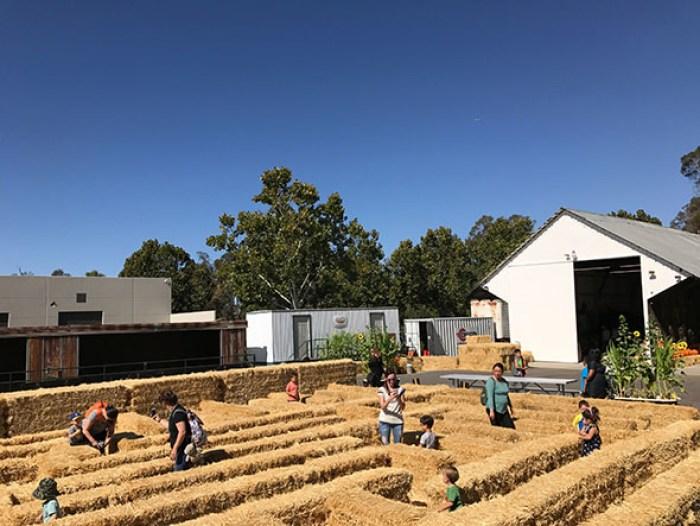 hay maze at g&m pumpkin patch