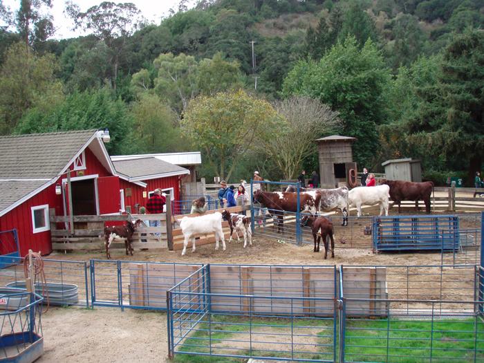 tildenpark little farm berkeley