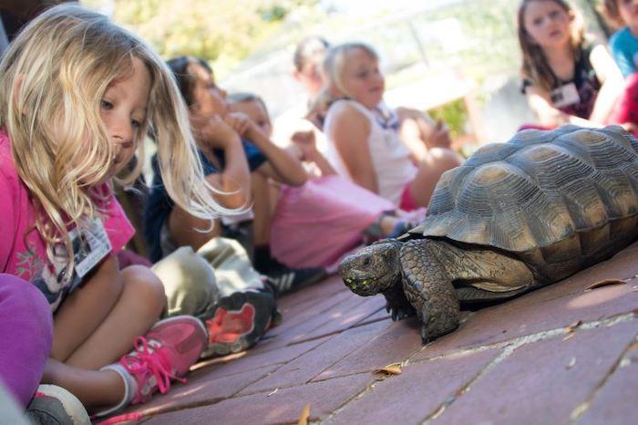child and desert tortoise