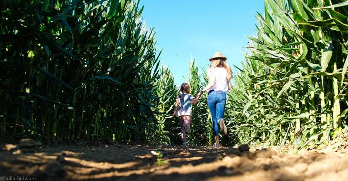 g and s corn maze