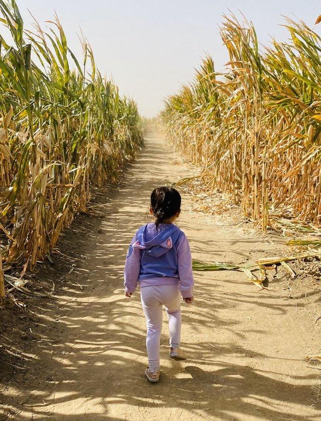 epic corn maze at Dell'Osso Family Farm
