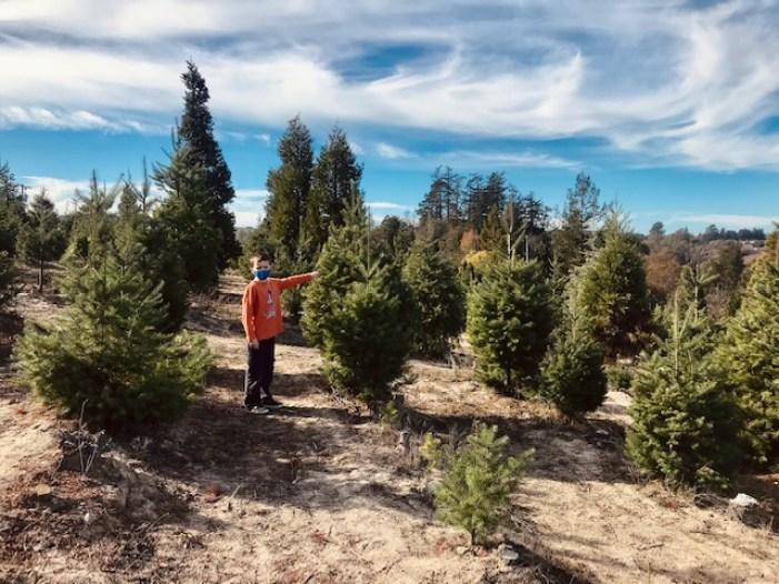 Frosty Mountain Tree Farm Sebastopol Trees