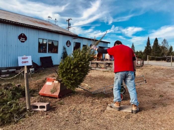 Frosty Mountain Tree Farm Sebastopol