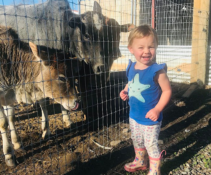 toddler with big farm animals