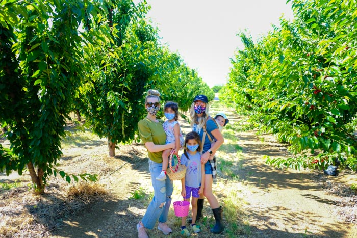 Brentwood cherry picking